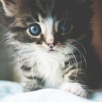Meaow <3