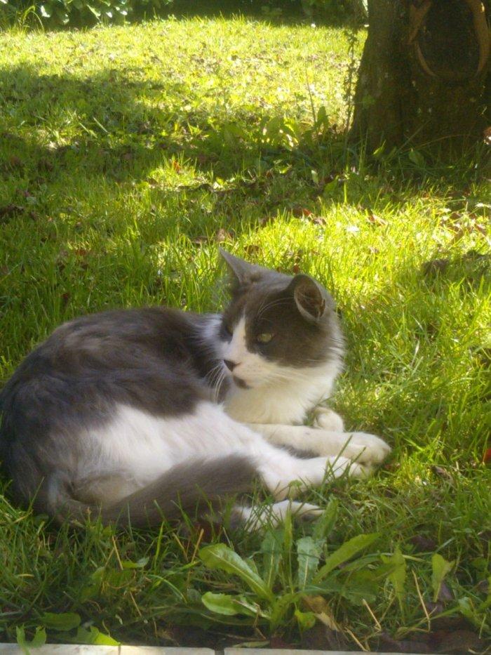 Mon chat . <3