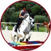 Blog-Chevaux06
