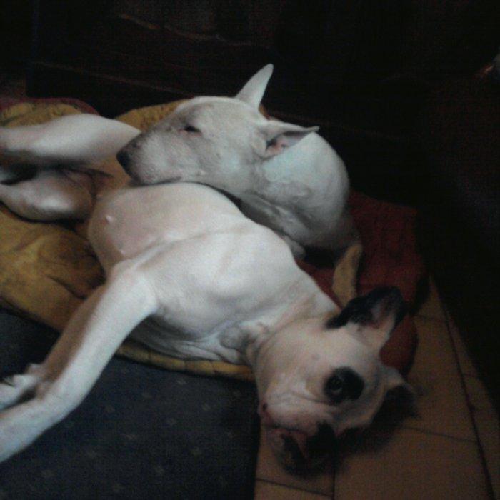 Nala et sa cousine, la chienne à ma soeur
