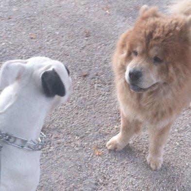 Nala et son nouveau copain de promenade d'ici