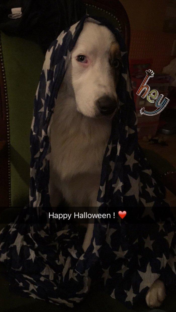Maya vous souhaite un Joyeux Halloween à tous ! 83 ♥