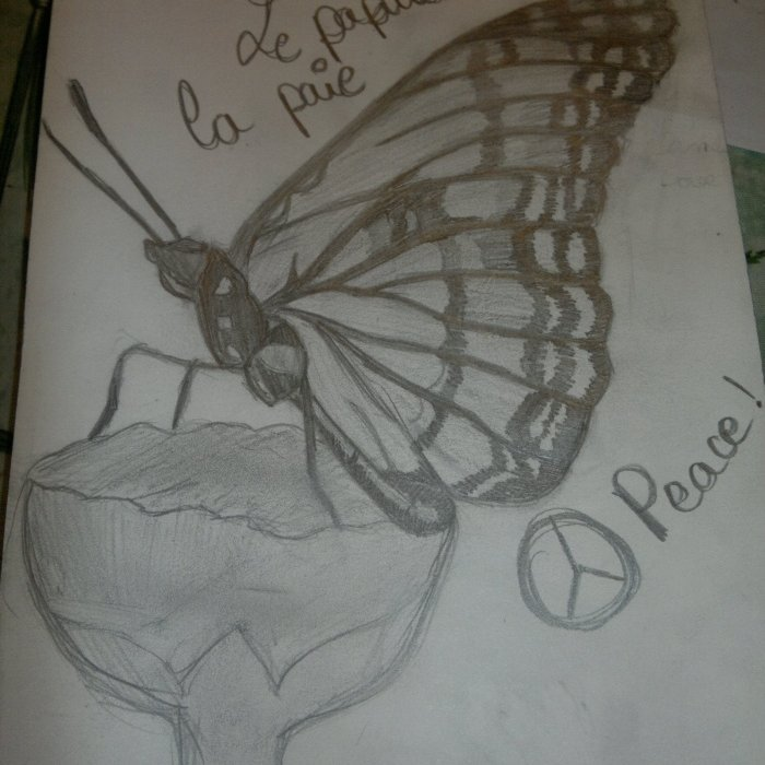 le papillon de la paie peace