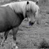 Profil de Horseastuc
