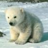 passion-ours-et-panda