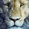 Profil de Narnia-fiction-701