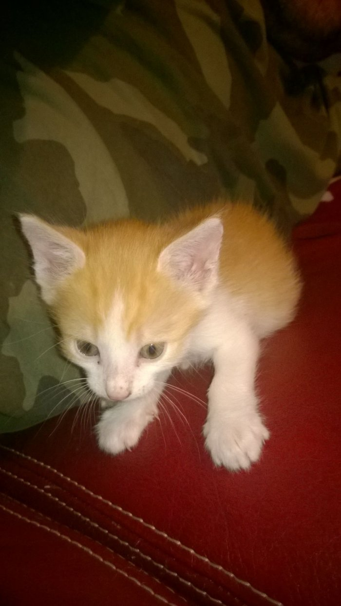 Mon chat tigrou quand je les eu début la il avait 1 mois trop mignon mouaaaa