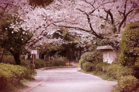 Allée des Cerisiers ♥