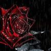 rosebleucouleurosean
