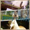 pony-candy