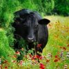 Profil de agri03