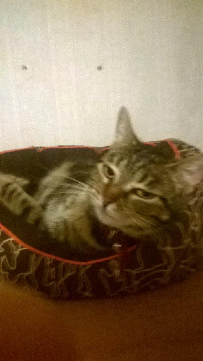 Lolita, le chat qui prend les humains pour des esclaves