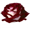 ROSE-OSIRIA