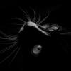 Profil de Lokia