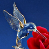 Profil de Crystal-Humming-Bird