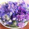 Profil de violette71
