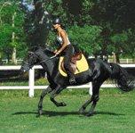 Equitation classique Saint Médard : stages et séjours Equitation classique avec l'UCPA
