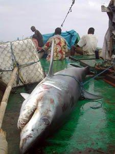 Programme Requins | Longitude 181
