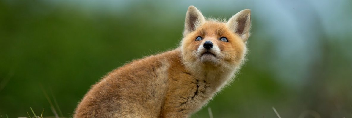 Protégeons les animaux sauvages libres contre les actes de cruauté - Fondation 30 Millions d'Amis
