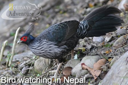 Bird watching in Nepal, Bird watching tour in Nepal | Trekking in Nepal, Holidays adventure in Nepal, Trekking and tour operator agency in Nepal