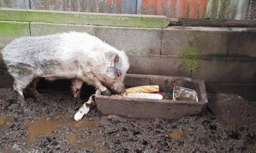 Pétition : Affamés, ces animaux se mangent entre eux ! Mobilisons les autorités compétentes pour que justice soit faite