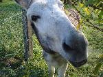 Fêtes des ânes au château de doys à garigny