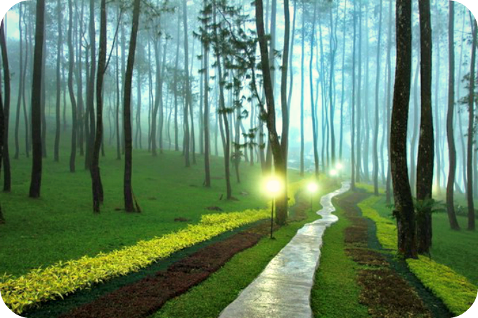 Those who Walk with Good Thoughts will Always Reach their Destination. | Daily Poetry and Stories Portal | Easy Branches