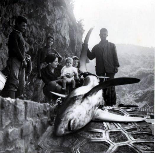 francis-garnier,beni-haoua,andre pierra,et requin;http://alger-roi.fr