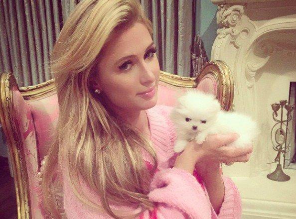 Paris Hilton : elle dépense plus 25 000$ pour deux chiots !