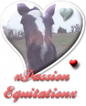 Blog de xPassion-Equitationx