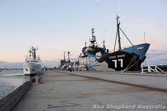 Sea Shepherd Australia :: Sea Shepherd launches Operation Relentless, its 10th Antarctic whale defence campaign