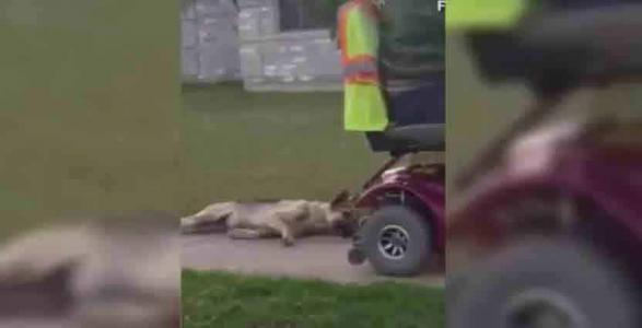 Pétition : Un homme ivre traîne son chien accroché à son véhicule !