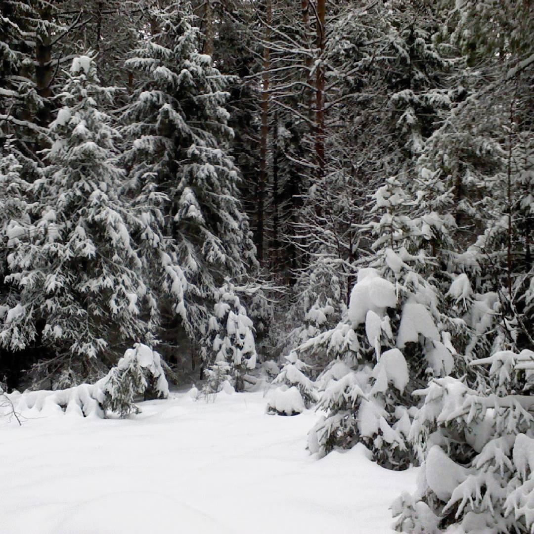 """Александр Гермаков on Instagram: """"Где то идут дожди, а у нас отличная погода. Такой заснеженный лес у нас в Воткин?..."""