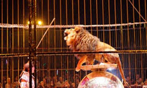 Pétition : En finir avec les cirques avec animaux à ST Malo