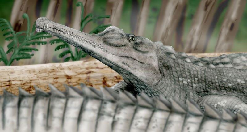 À cause d'une mesure de Trump, de nombreux fossiles de dinosaures risquent la destruction