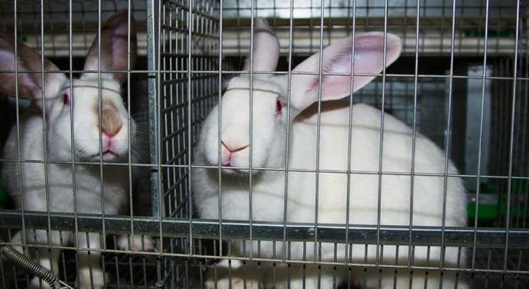 Les produits cosmétiques ne seront plus testés sur les animaux