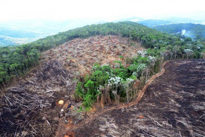 Au Brésil, chaque semaine un défenseur de l'environnement est assassiné