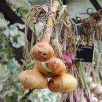 Oignons et échalotes : du séchage à la conservation