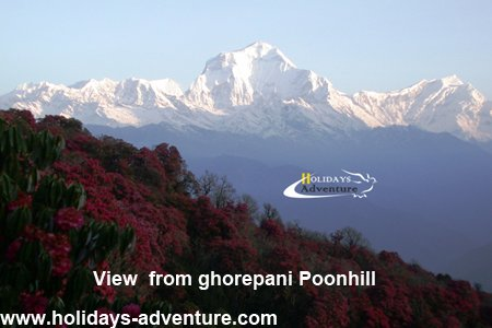 Ghorepani Poon hill trekking, Ghorepani panorama Trek, | Holidays adventure in Nepal, The best trekking in Nepal, Himalayan trekking and tour operator Ajancy in Nepal.