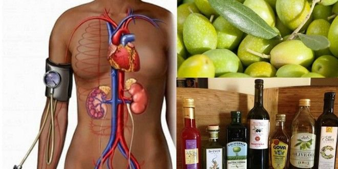 The Exact Dose of Olive Leaf Extract You NEED to Take to Lower Blood Pressure and Prevent Heart Disease - Healthy Food Society