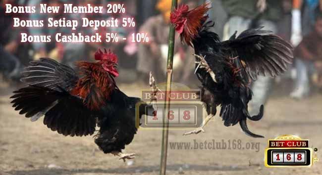Judi Sabung Ayam Online Teraman Bonus Terbesar