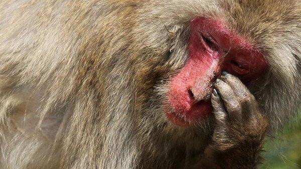 les animaux connaissent l'empathie et l'altruisme