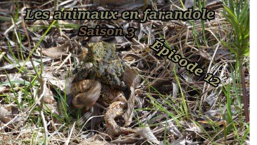 Les animaux en farandole: saison 3: épisode 12 - Vidéo dailymotion