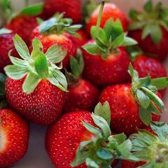 Les fraises seraient bénéfiques contre le cancer du sein