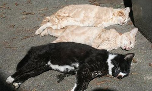 Pétition : Des chattes et des chatons empoisonnés et disparus à Champs-sur-Marne (77)