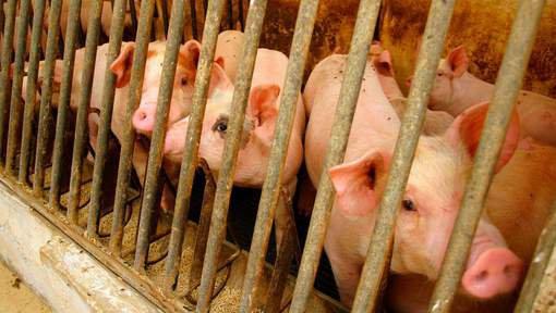 16-12-2017 - Flandre orientale - Deinze - Deux mille porcs sont morts dans un incendie