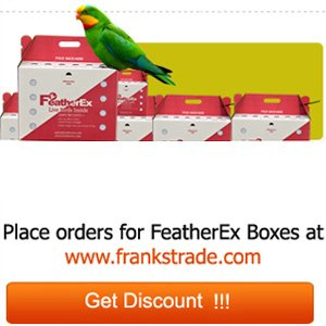 Live Birds Shipping Boxes - Pets Listing for Sale