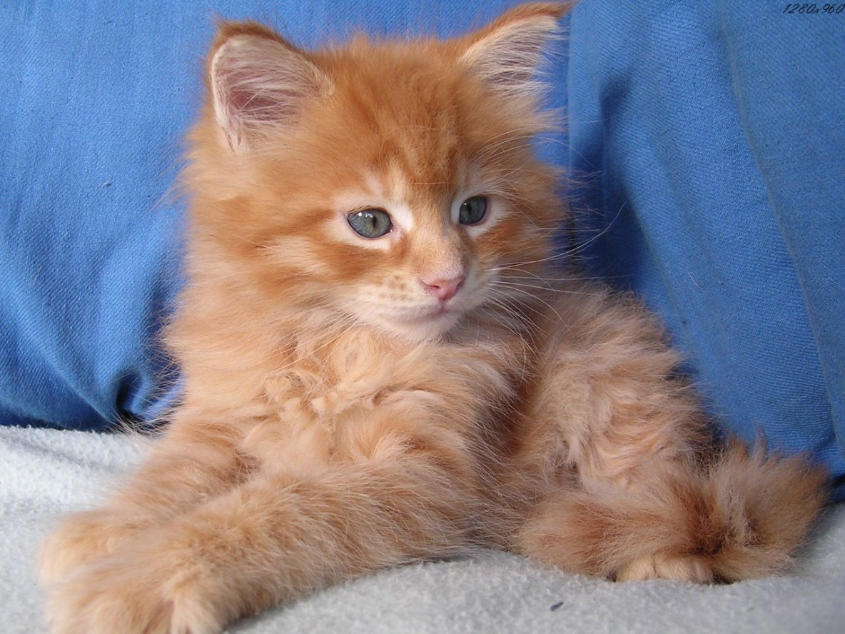 pour toi ma belle , ce beau petit chat
