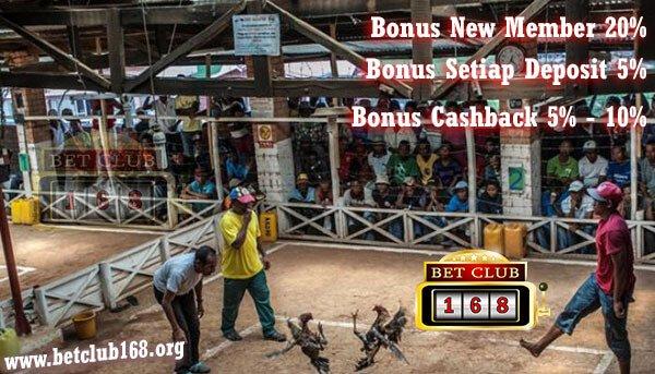 Main Judi Sabung Ayam Online Terbesar Keuntungan Nyata