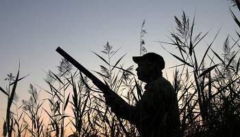 Pétition : Pour l'arrêt de la chasse le dimanche